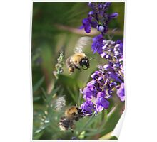 Late summer pollinators Poster