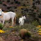 IN THE WILD by Kathy Cline