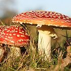 Fly agaric by cuprum