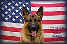 German Shepherd -  U.S.A. by Sandy Keeton