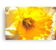 Glowing Daffodil Canvas Print