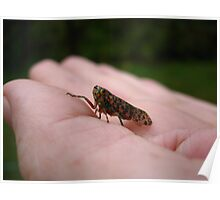 A Pretty, Speckled Leafhopper Poster