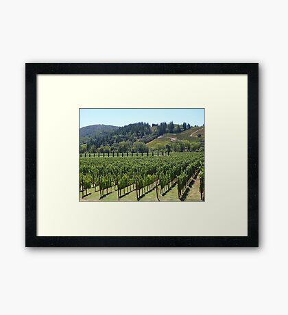 Napa Valley Vineyard Framed Print