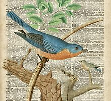 Eastern Blue Birds Canary Over Old Book Page  by DictionaryArt