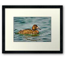 Dribbling Duck  Framed Print