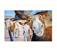 Friendly Donkeys Art Print