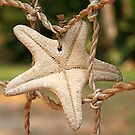 Treasured Sea Star by FLgirl