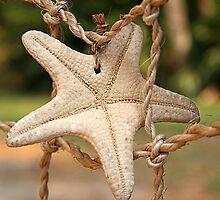 Treasured Sea Star by FLgirl