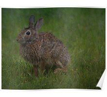 Bunny Portrait Poster