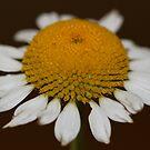 wildflower  by katpartridge