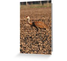 Sandhill Crane in Field Greeting Card