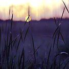 velvet sunset by leapdaybride