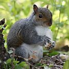 What, no nuts?! by dilouise