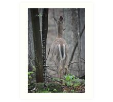 Deer Looks in Ravine Art Print