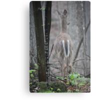 Deer Looks in Ravine Metal Print