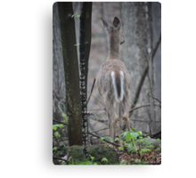 Deer Looks in Ravine Canvas Print
