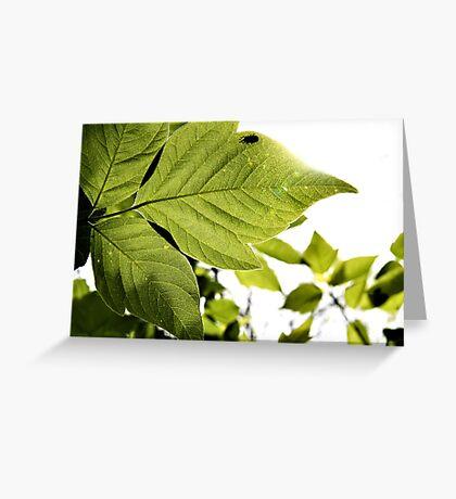 Box Elder Beetle Greeting Card