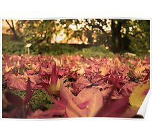 Fallen Autumn Leafs Poster