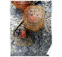 Orange Red Seeds Encased in a Lacy Pod Poster