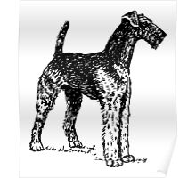 Airedale Terrier Drawing Poster