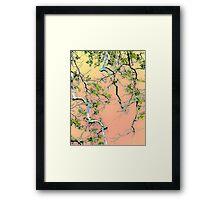 Spring Maple Framed Print