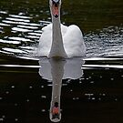 Swan@Margrove by dougie1page2
