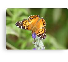 Bright Wings Canvas Print