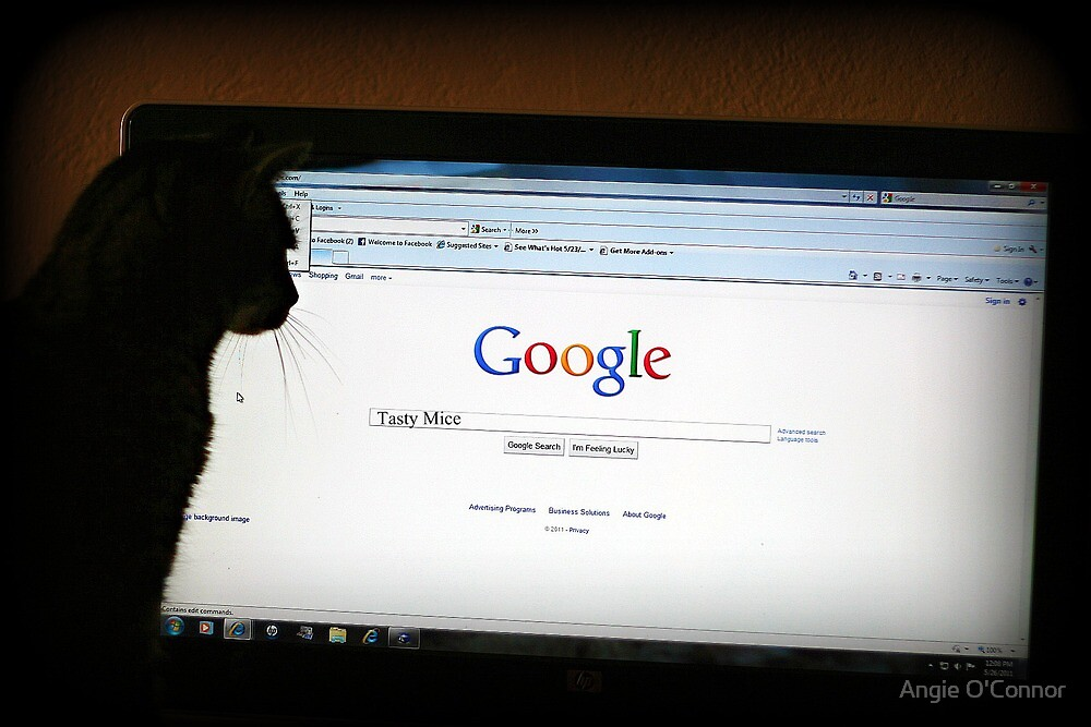Even Cats can Google by Angie O'Connor