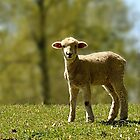 Precious Lamb by Sheryl Langston