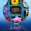 flower sphere by Dean Messenger