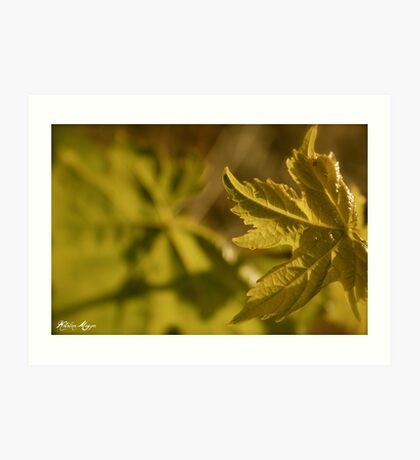 Young Vine Art Print