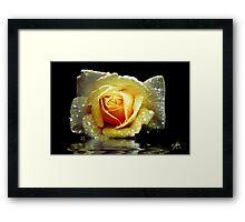 Sunny Delight 2 Framed Print