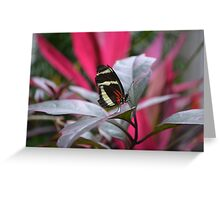 The Postman Butterfly, posing on a leaf Greeting Card