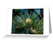 Pine Cones, Someday Greeting Card