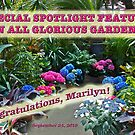 Marilyn's Special Feature Banner by MotherNature
