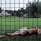 Lazy Ranch Roo by cardiocentric