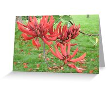 radiant red blossoms Greeting Card