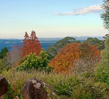 Blue Mountains Botanic Garden, Mt Tomah by jayneeldred