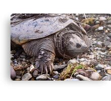 Common Snapping Turtle Metal Print