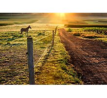 Work Horse and Dirt Road Photographic Print