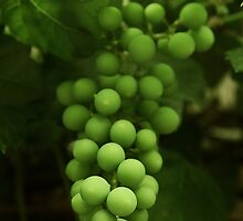 Sour Grapes by Alyce Taylor