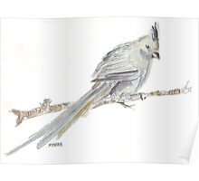 Speckled Mousebird Poster