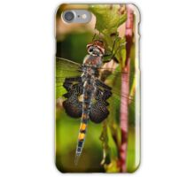 Black Saddlebag Dragonfly iPhone Case/Skin