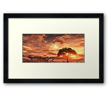 Dolphins on the track. Framed Print