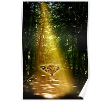 Butterfly in the Light Beam Poster