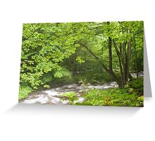 Luxuriant vegetation by flowing river  Greeting Card