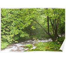 Luxuriant vegetation by flowing river  Poster
