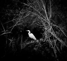 Quiet explorations | Photographs by J. M. Golding by J. M. Golding