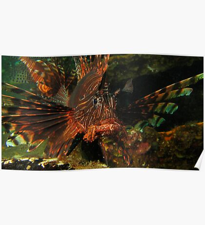 PNG Lion Fish Poster