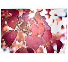 Autumn Leaves - 2 Poster